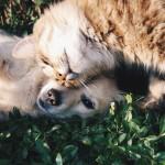 Tierhaarallergie Symptome - Tierhaarallergie heilen.