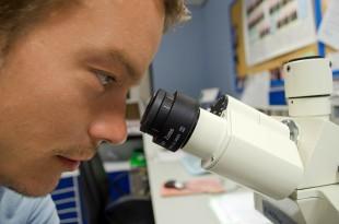 Was sind Allergene bzw. Antigene?