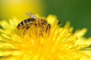 Pollen zählen zu den häufigsten Auslösern einer Allergie