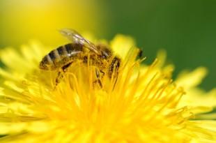 Auslöser einer Allergie