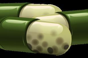 Wurmtherapie