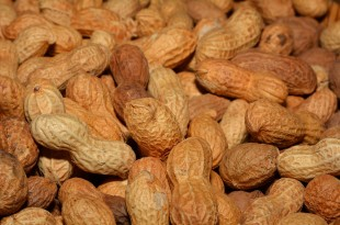 Erdnussallergie - Symptome und Therapie