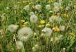 Heuschnupfen - Pollenallergie Symptome und Test