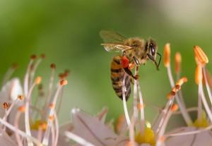 Bienenstich behandeln - Welche Möglichkeiten gibt es?