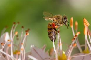 Wie einen Bienenstich behandeln?