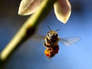 Bienenstich - was hilft wirklich?