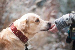 Allergien beim Hund: Ist es möglich, dass Ihr Hund an einer Allergie leidet?