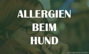 Allergien beim Hund - Ratgeber