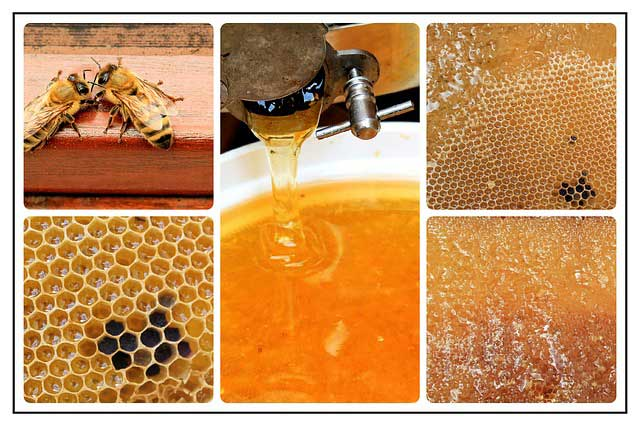 Honig Allergie - Ursachen, Symptome & Behandlung