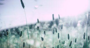 Wie sinnvoll sind Pollenschutzgitter und wo finden sie Anwendung?