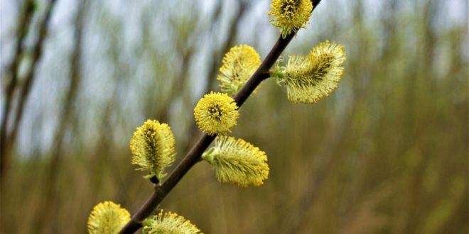 Wie man die Symptome der Frühjahrsallergien lindern kann